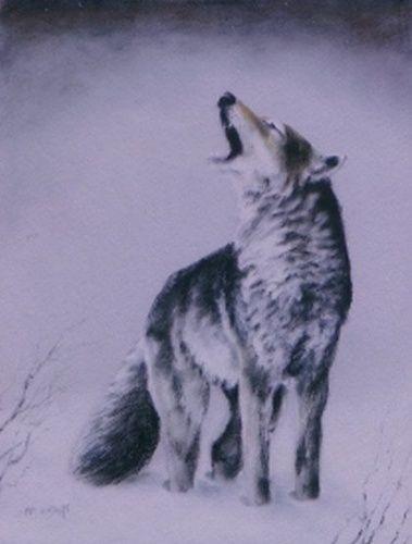 Dessin D Un Loup Hurlant